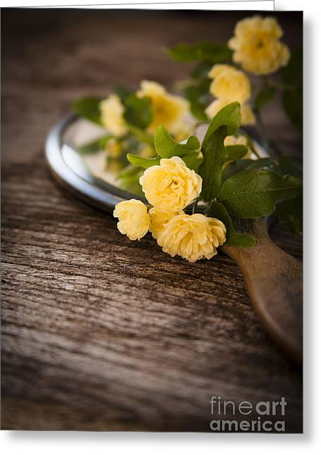 Hand Mirror Greeting Cards - Rosa banksiae lutea Greeting Card by Jan Bickerton