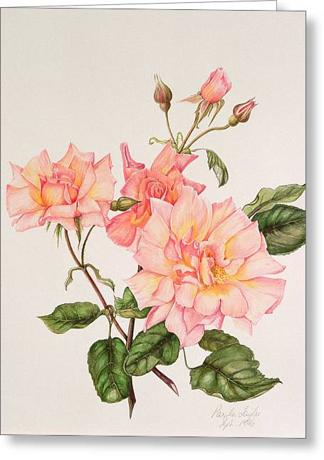 Thin Paintings Greeting Cards - Rosa Compassion Greeting Card by Pamela A Taylor