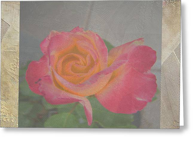 Book Of Psalms Greeting Cards - Rosa Double Delight Greeting Card by Beverly Guilliams