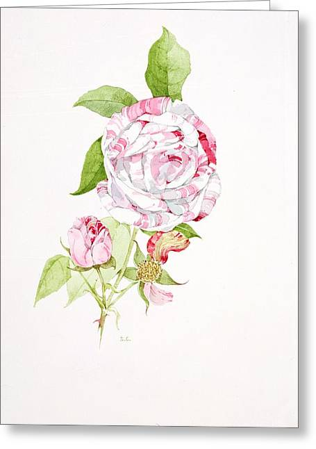21st Greeting Cards - Rosa Ferdinand Pichard Greeting Card by Sarah Creswell