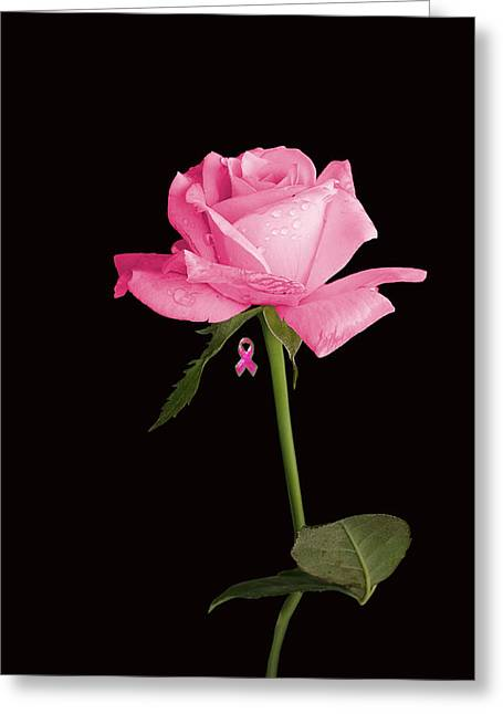 Best Sellers -  - Greeting Cards For Cancer Greeting Cards - Rosa For Cancer iphone Greeting Card by James Lopez