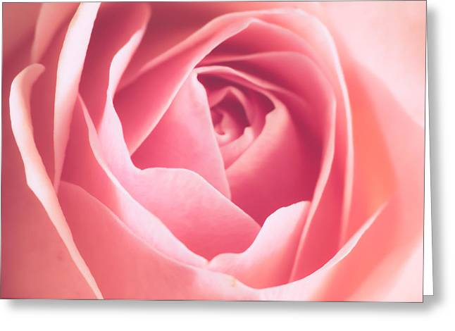 """soft Focus"" Greeting Cards - Rosa Greeting Card by Wim Lanclus"
