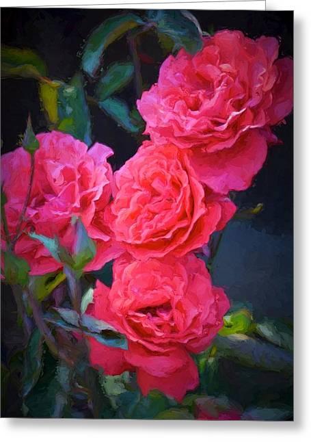 Rose 138 Greeting Card by Pamela Cooper