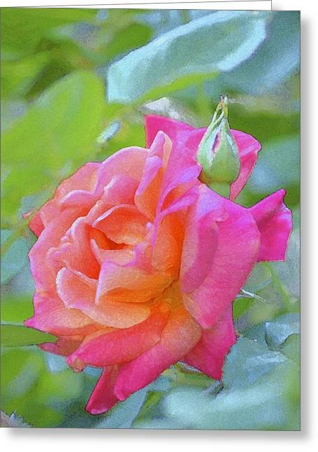 Pamela Cooper Greeting Cards - Rose 178 Greeting Card by Pamela Cooper