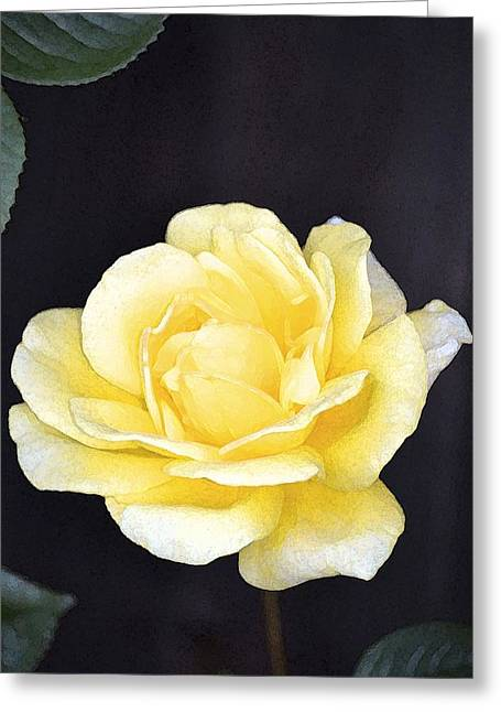 Rose 196 Greeting Card by Pamela Cooper