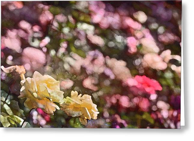 Rose 209 Greeting Card by Pamela Cooper