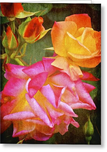 Pamela Cooper Greeting Cards - Rose 266 Greeting Card by Pamela Cooper