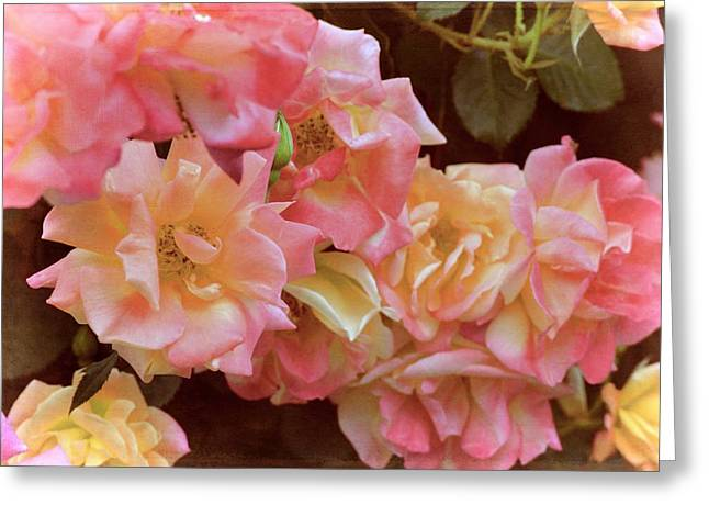 Pamela Cooper Greeting Cards - Rose 287 Greeting Card by Pamela Cooper
