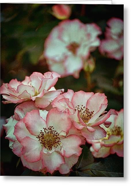Pamela Cooper Greeting Cards - Rose 299 Greeting Card by Pamela Cooper