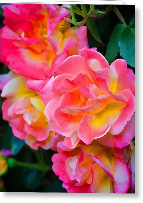 Pamela Cooper Greeting Cards - Rose 302 Greeting Card by Pamela Cooper