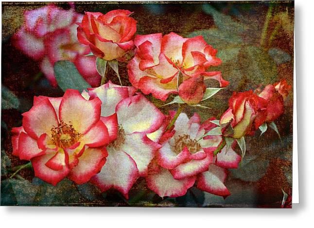 Pamela Cooper Greeting Cards - Rose 305 Greeting Card by Pamela Cooper