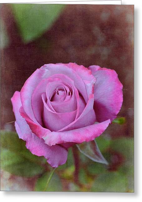 Pamela Cooper Greeting Cards - Rose 315 Greeting Card by Pamela Cooper