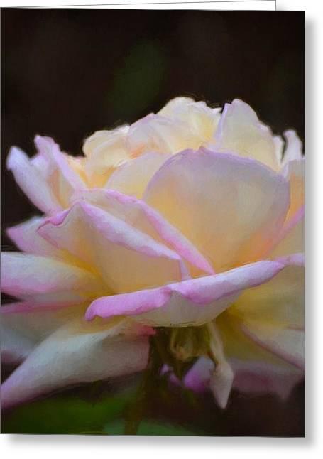Pamela Cooper Greeting Cards - Rose 323 Greeting Card by Pamela Cooper