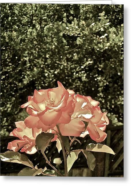 Rose 55 Greeting Card by Pamela Cooper