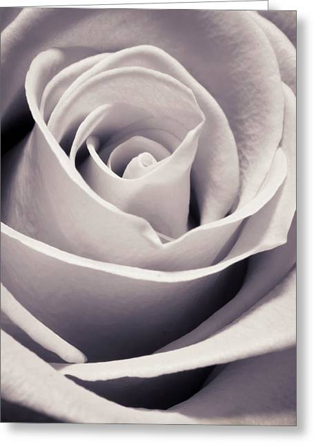 Monochrome Greeting Cards - Rose Greeting Card by Adam Romanowicz