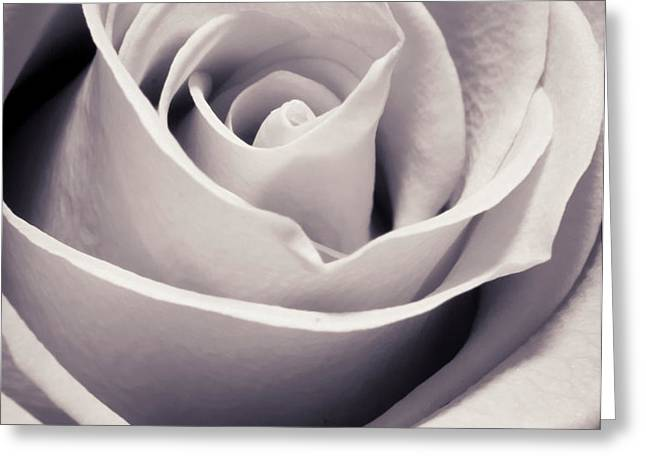 Rose Greeting Card by Adam Romanowicz