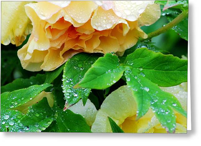 Botanic Greeting Cards - Rose and Leaves on a Rainy Day Greeting Card by Nancy Mueller