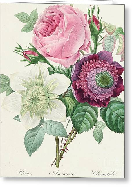 Labelled Greeting Cards - Rose Anemone and Clematis Greeting Card by Pierre Joseph Redoute