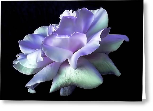 Purple Floral Greeting Cards - Rose Awakening Floral Greeting Card by Jennie Marie Schell
