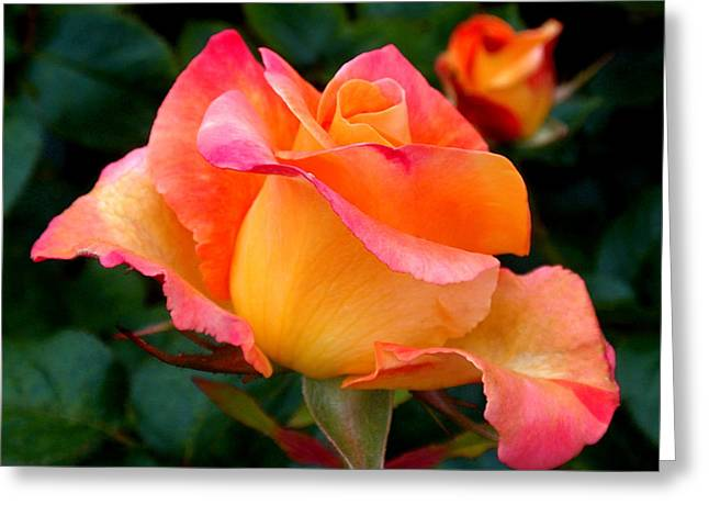 Fresh Greeting Cards - Rose Beauty Greeting Card by Rona Black