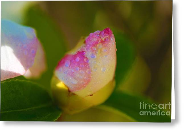 Flower Design Greeting Cards - Rose Bud Greeting Card by Cheryl Young