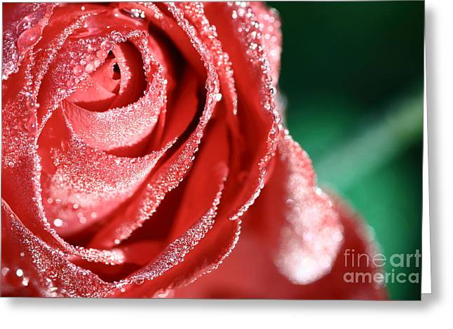 Close Focus Floral Greeting Cards - Rose bud with morning dew water Greeting Card by Gregory DUBUS