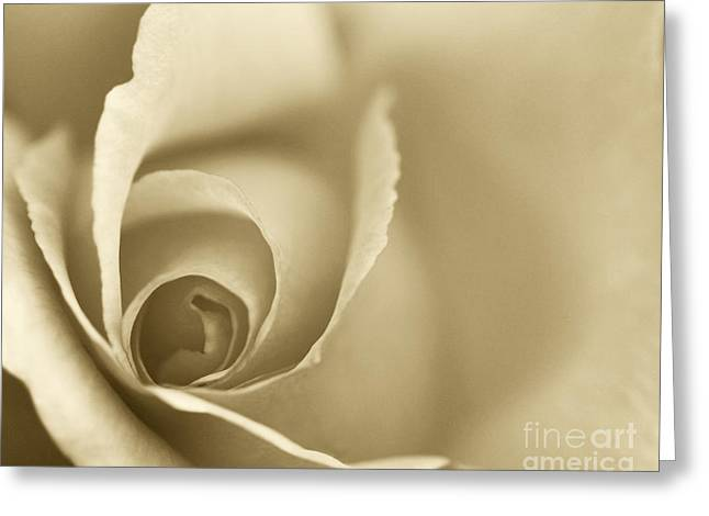 Rose Close Up - Gold Greeting Card by Natalie Kinnear