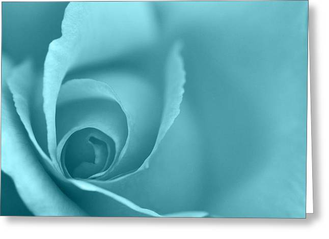 Natalie Kinnear Greeting Cards - Rose Close Up - Turquoise Greeting Card by Natalie Kinnear
