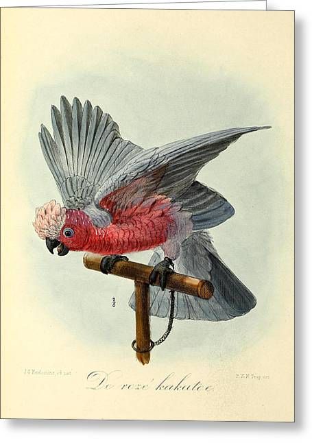 Rose Cockatoo Greeting Card by J G Keulemans