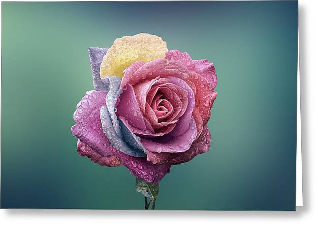 Recently Sold -  - Rose Petals Greeting Cards - Rose colorful Greeting Card by Bess Hamiti