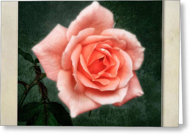 Apricot Digital Art Greeting Cards - Rose Congratulations Greeting Card by John Edwards