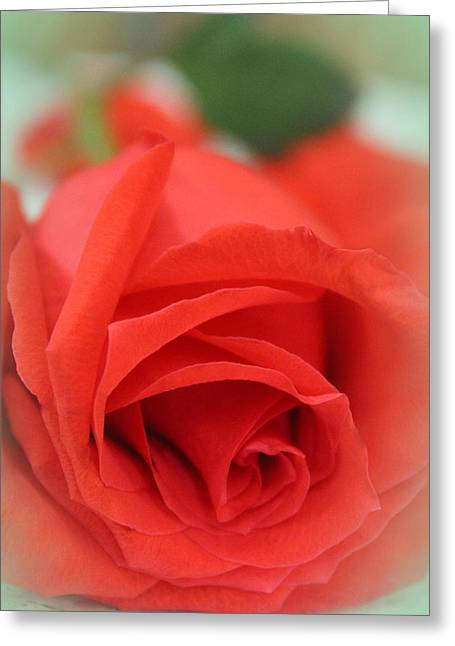 Special Occasion Greeting Cards - Rose d Amour Greeting Card by  The Art Of Marilyn Ridoutt-Greene