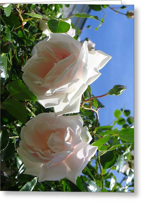 Reverence Greeting Cards - Rose Duo Greeting Card by Sonali Gangane