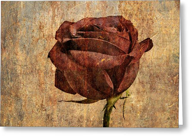 Rose En Variation - S22ct05 Greeting Card by Variance Collections