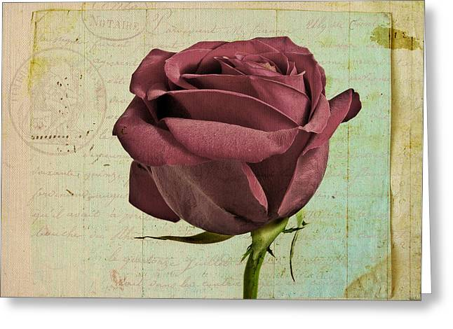 Vintage Rose Greeting Cards - Rose en Variation - s23ct06 Greeting Card by Variance Collections