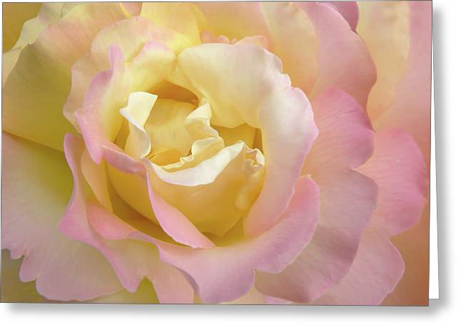 Pale Pink Greeting Cards - Rose Flower Parfait Greeting Card by Jennie Marie Schell