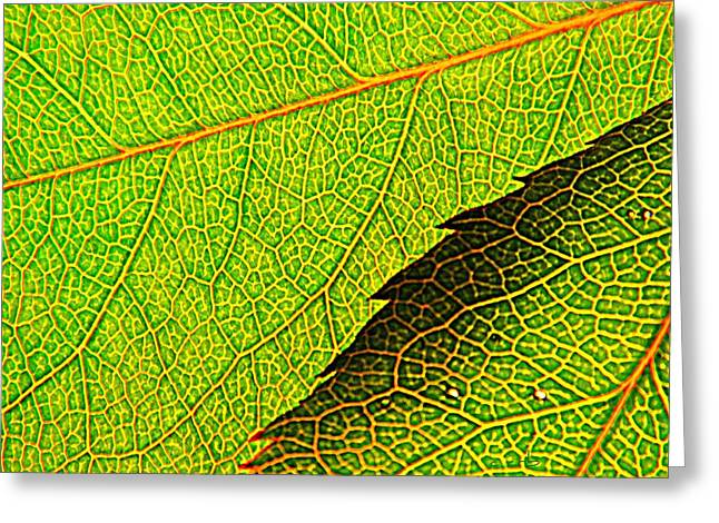 Avocado Leaves Greeting Cards - Rose Foliage Number Two Greeting Card by Chris Berry