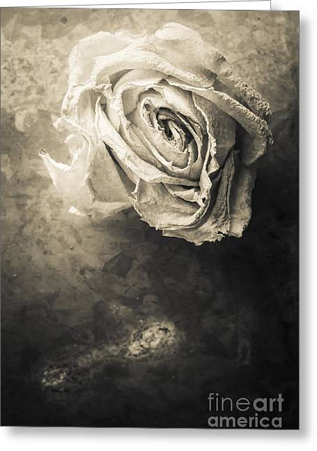 Floral Still Life Greeting Cards - Rose From Another Day Greeting Card by Edward Fielding
