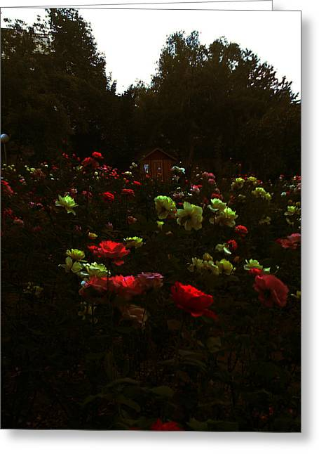 Lucy D Photographs Greeting Cards - Rose Garden Greeting Card by Lucy D