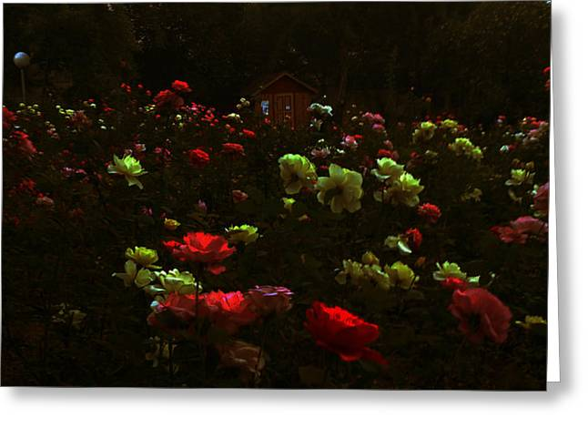Rose Garden Greeting Card by Lucy D