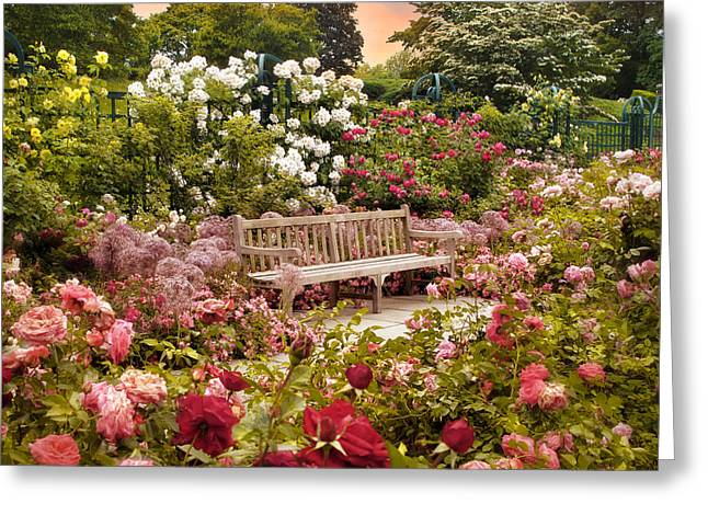 Trellis Digital Greeting Cards - Rose Garden Sunset Greeting Card by Jessica Jenney