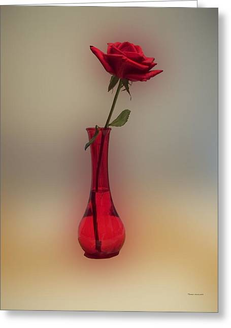 Photographs With Red. Greeting Cards - Rose in a Vase Greeting Card by Thomas Woolworth