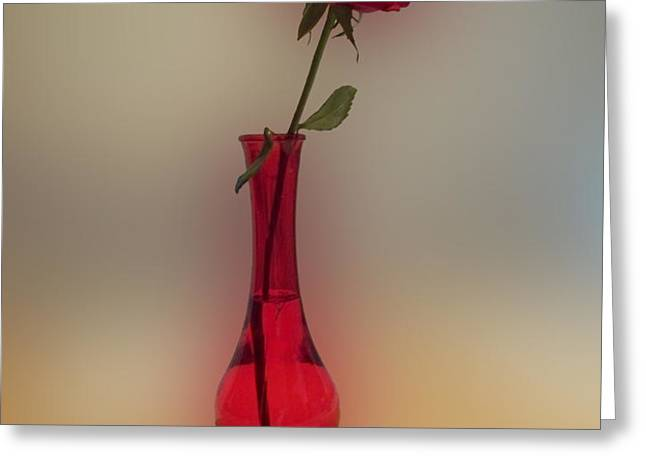 Rose in a Vase Greeting Card by Thomas Woolworth