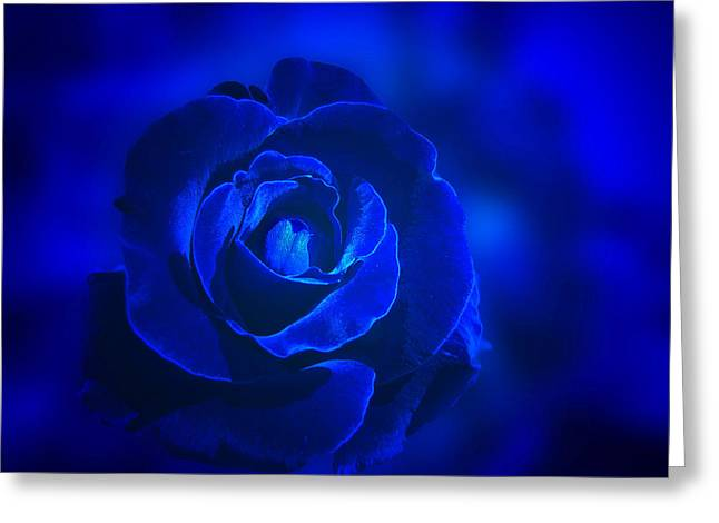 Indiana Roses Greeting Cards - Rose in Blue Greeting Card by Sandy Keeton