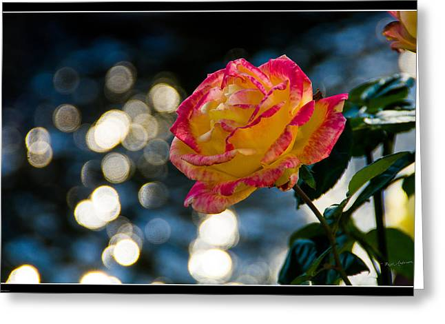 Dappled Light Greeting Cards - Rose in Dappled Afternoon Light Greeting Card by Mick Anderson