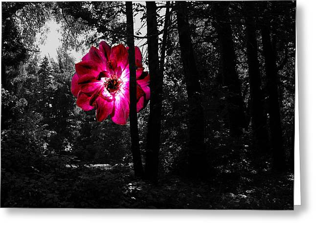 Bold Contrast Greeting Cards - Rose In Field 181 Greeting Card by Leonard Rosenfield