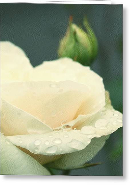 Pdx Roses Greeting Cards - Rose in the rain Greeting Card by Cathie Tyler