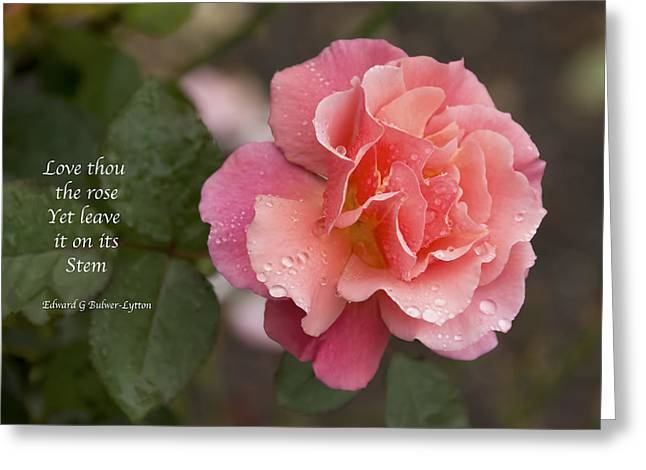 Sunlight On Flowers Greeting Cards - Rose in the Rain Greeting Card by Penny Lisowski