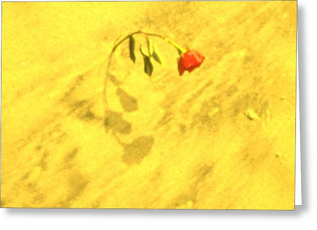Shadow Effect Greeting Cards - Rose in the Sand Greeting Card by Joe  Burns
