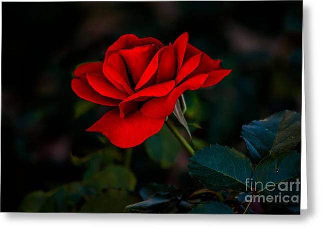 Haybale Photographs Greeting Cards - Rose Is A Rose Greeting Card by Robert Bales
